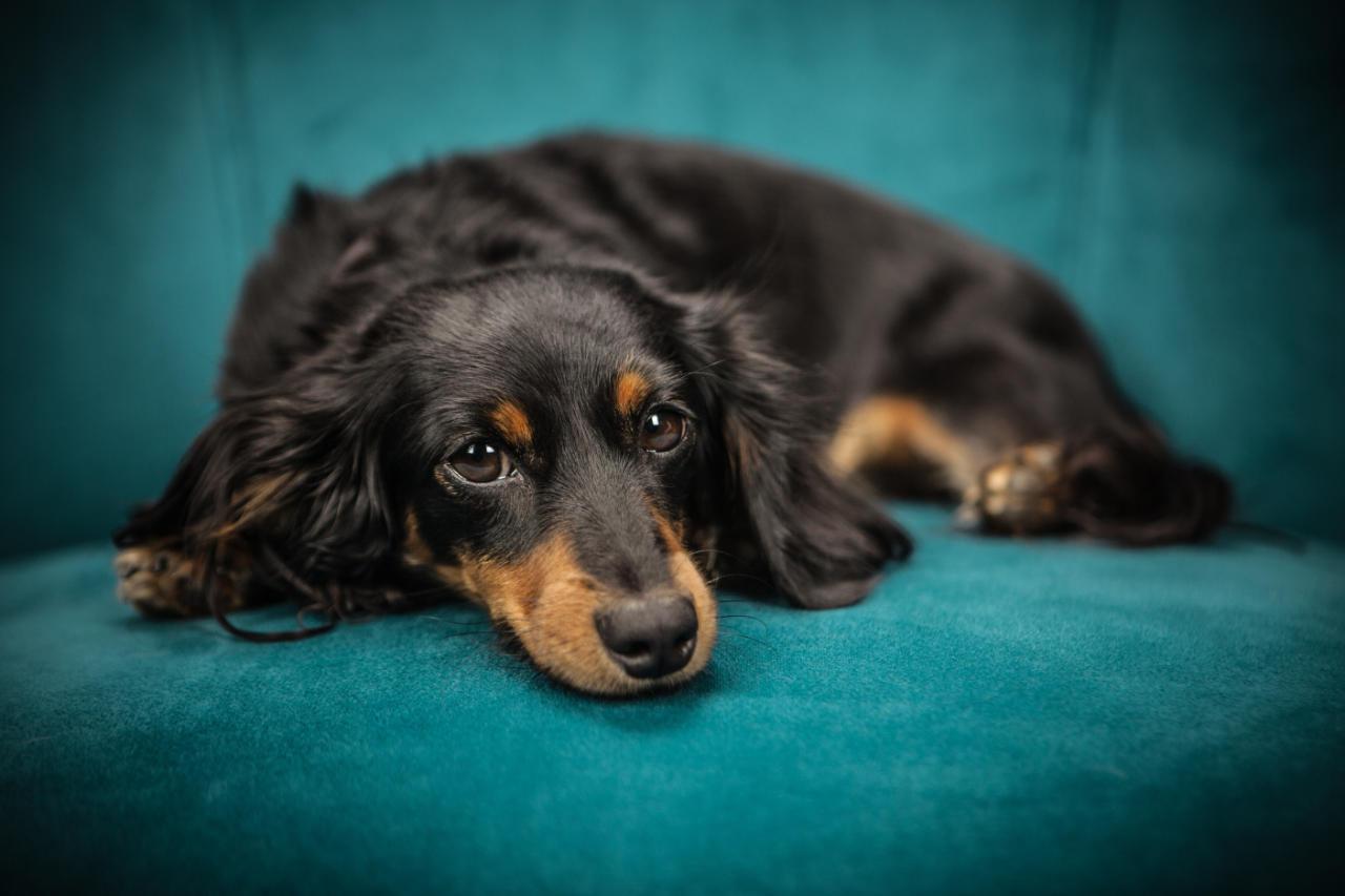 Endoskopie bei Haustieren - Tierarztpraxis in Rommerskirchen